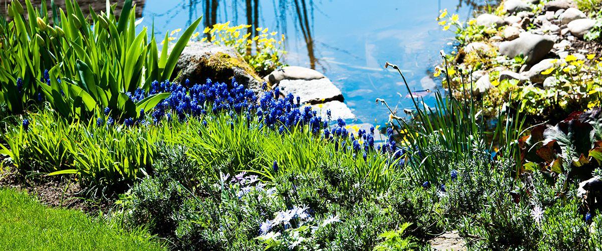 Rabatte am Teich » Braun Gartenform