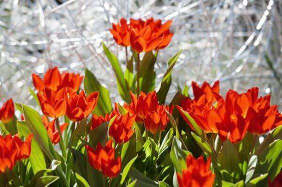 Rote Blumen » Braun Gartenform